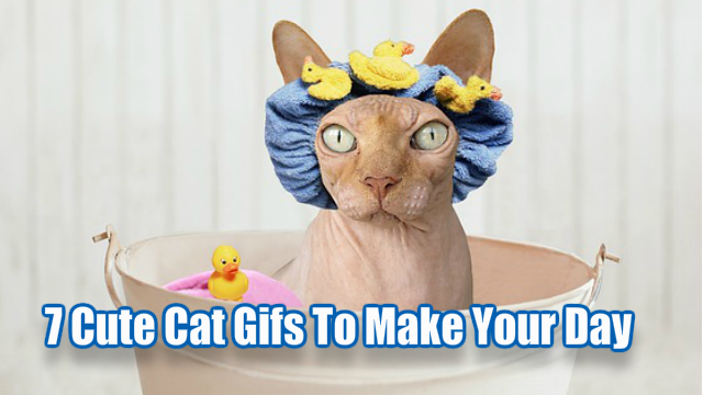 7 Cute Cat Gifs To Make Your Day