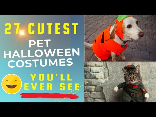 27 Cute Halloween Pet Costumes